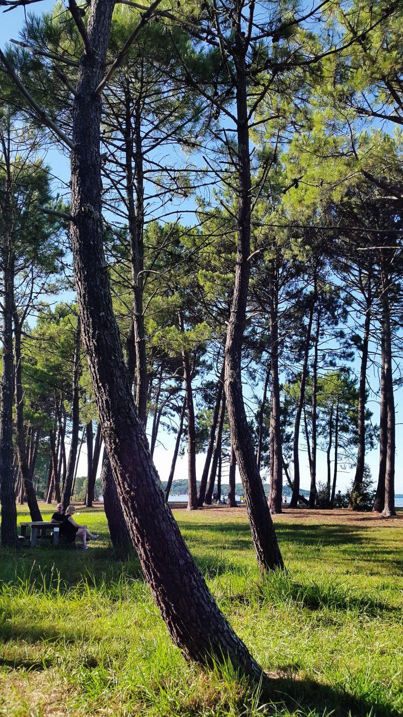 'Vis ta plage' cet été à Biscarrosse et en Pays de Born. Connaissance du lac aussi...