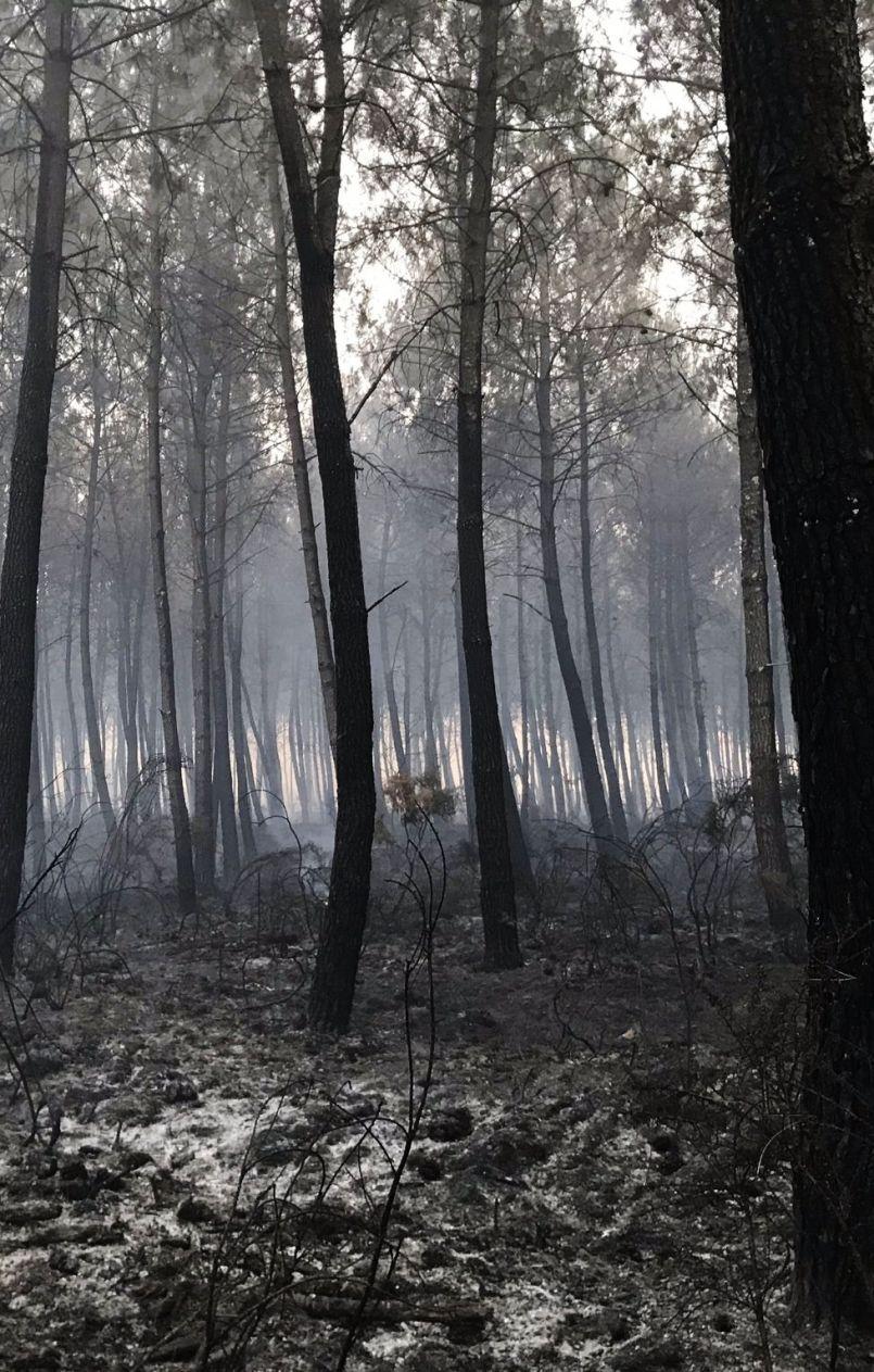 Incendie d'Ychoux : le maire Marc Ducom déplore un manque de moyens au départ du sinistre...
