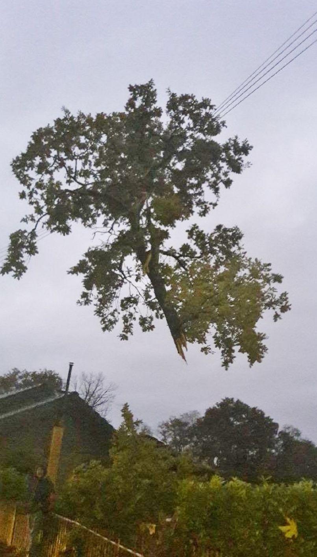 Tempête 'Amélie' : 3000 foyers environ encore privés d'électricité dans les Landes ce 4 novembre à 12h...