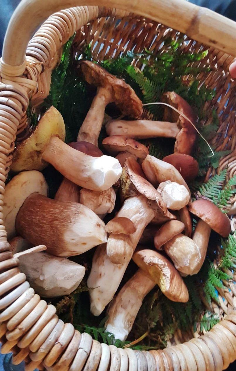 Routes inondées mais forêt landaise avec de très nombreux champignons...