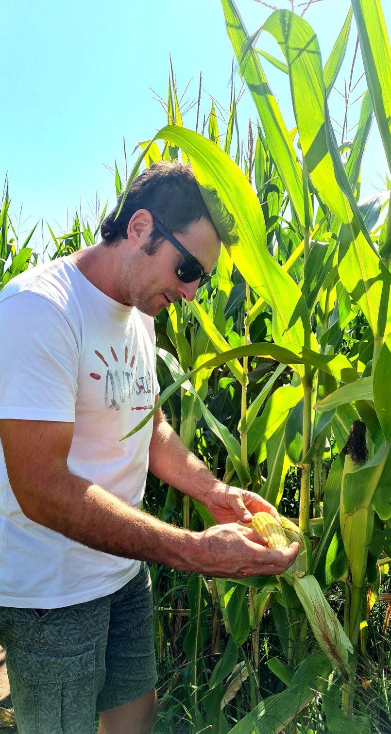 Par ici la sortie...si vous arrivez à la retrouver (lol), au Labyrinthe de maïs de Gastes (40).
